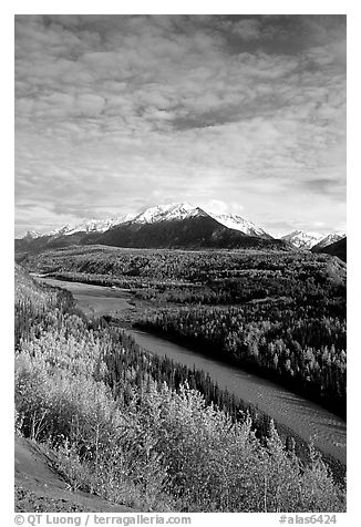 Autumn Aspens and Chugach range, late afternoon. Alaska, USA (black and white)