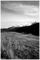 Aspens in fall colors,  Chugach mountains, winding river. Alaska, USA ( black and white)