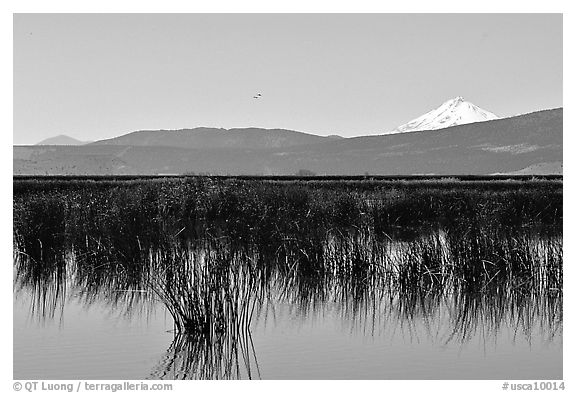 Mt Shasta seen from a marsh in the North. California, USA