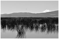 Mt Shasta seen from a marsh in the North. California, USA (black and white)