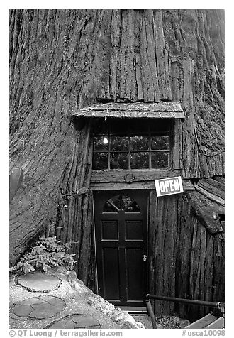 Entrance of the World Famous Tree House, near Leggett. California, USA (black and white)