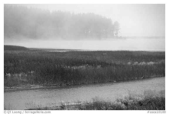 Humbolt Lagoon in the fog. California, USA (black and white)