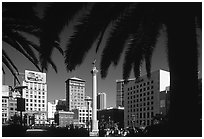 Union square framed by palm trees, afternoon. San Francisco, California, USA ( black and white)