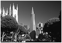 Cathedral and Transamerica Pyramid, North Beach, afternoon. San Francisco, California, USA ( black and white)