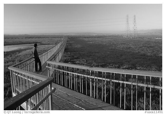 Man standing on boardwalk, Palo Alto Baylands. Palo Alto,  California, USA