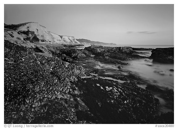 Mussels and Cliffs, Sculptured Beach, sunset. Point Reyes National Seashore, California, USA (black and white)