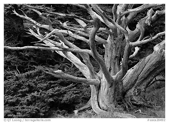 black and white tree photos. USA (lack and white)