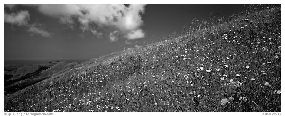 Landscape with grassy hills, wildflowers, and cloud. Palo Alto,  California, USA (black and white)