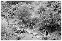 Pathway and stairs, Alum Rock Park. San Jose, California, USA ( black and white)