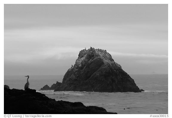 Bird and seastack at sunset. Point Lobos State Preserve, California, USA (black and white)