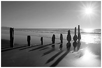 Row of wood pilars and sun near Fort Funston,  late afternoon, San Francisco. San Francisco, California, USA ( black and white)