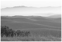 Rolling Hills  seen from Laguna Seca, Fort Ord National Monument. California, USA (black and white)