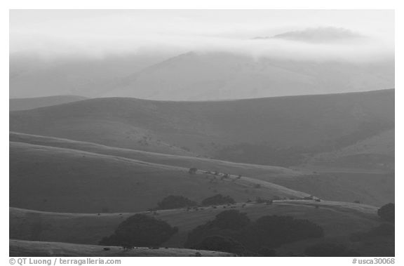 Rolling Hills and fog, sunrise. California, USA (black and white)