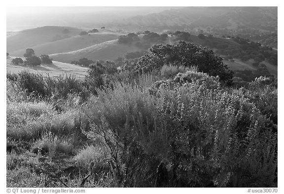 Bush and hills, sunrise, Fort Ord National Monument. California, USA