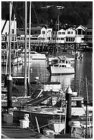 Boats and Fisherman's Wharf, afternoon, Monterey. Monterey, California, USA ( black and white)