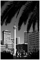 Union square and column framed by palm trees, afternoon. San Francisco, California, USA ( black and white)