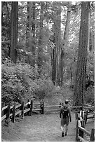 Hiker on trail. Big Basin Redwoods State Park,  California, USA (black and white)