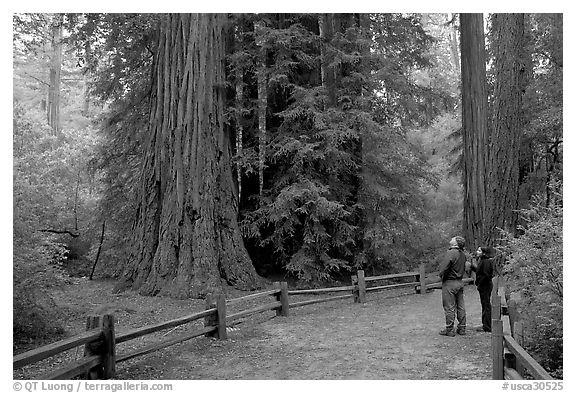 Tourists standing amongst redwood trees. Big Basin Redwoods State Park,  California, USA (black and white)