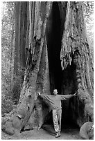 Visitor standing at the base of a hollowed-out redwood tree. Big Basin Redwoods State Park,  California, USA ( black and white)