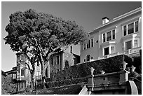 Tree and houses on hill, late afternoon. San Francisco, California, USA (black and white)