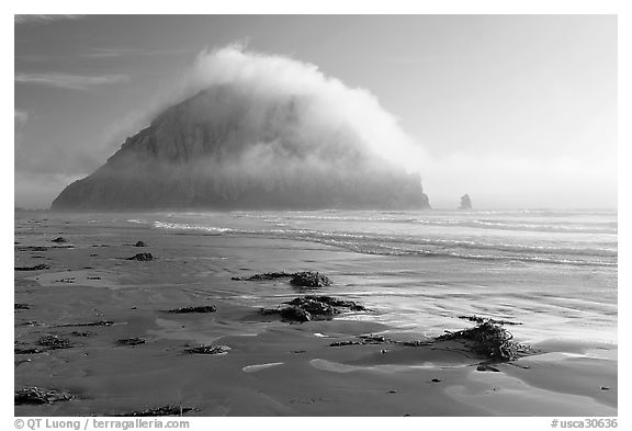 Beach with seaweed, and Morro Rock capped by afternoon fog. Morro Bay, USA (black and white)