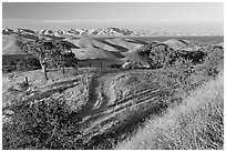 Rural path amongst oak and golden hills, San Luis Reservoir State Rec Area. California, USA ( black and white)