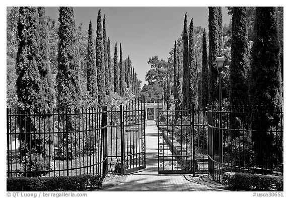 Gates, cypress and path, Villa Montalvo. Saragota,  California, USA