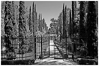 Gates, cypress and path, Villa Montalvo. Saragota,  California, USA (black and white)