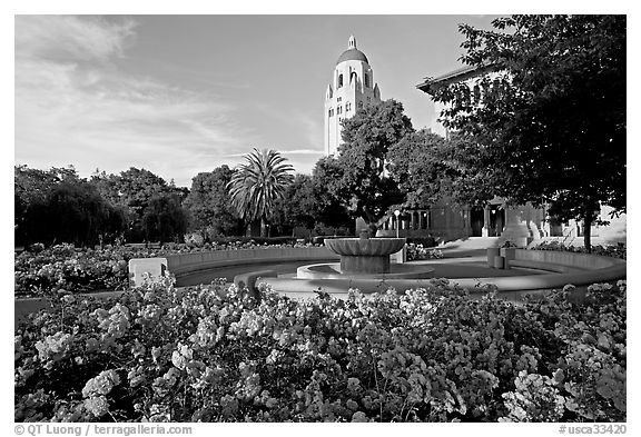 Hoover Tower and bed of roses, late afternoon. Stanford University, California, USA (black and white)