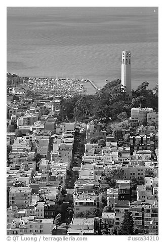 View from above of Telegraph Hill and Coit Tower, late afteroon. San Francisco, California, USA (black and white)
