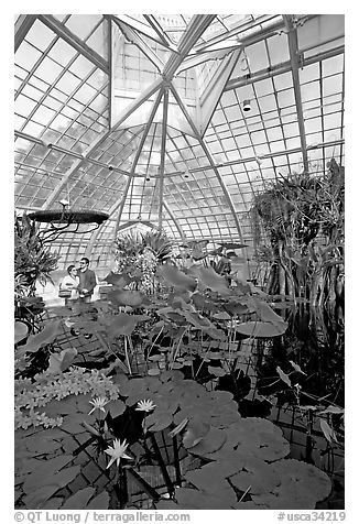 Aquatic plants section inside the Conservatory of Flowers. San Francisco, California, USA