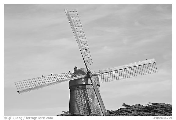 Dutch Mill and crows. San Francisco, California, USA (black and white)