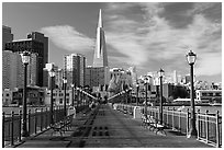 Pier 7 and Transamerica Pyramid, morning. San Francisco, California, USA ( black and white)