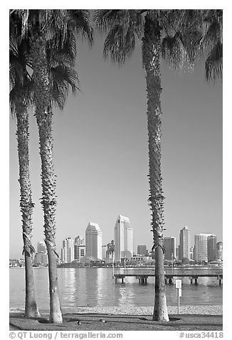 Skyline framed by palm trees from Coronado. San Diego, California, USA (black and white)