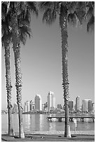 Skyline framed by palm trees from Coronado. San Diego, California, USA ( black and white)