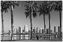 Palm trees and skyline, early morning. San Diego, California, USA (black and white)