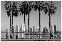 Bicyclist, palm trees and skyline, Coronado. San Diego, California, USA ( black and white)