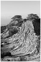 Broken Hill and Torrey Pines, sunrise, Torrey Pines State Preserve. La Jolla, San Diego, California, USA (black and white)