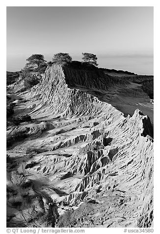 Eroded sandstone promontory,  Torrey Pines State Preserve. La Jolla, San Diego, California, USA (black and white)