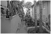 Narrow Alley. La Jolla, San Diego, California, USA (black and white)