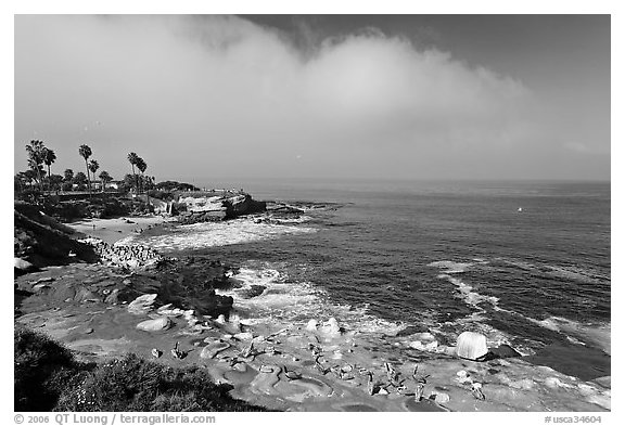 San Jolla Cove and seabirds. La Jolla, San Diego, California, USA (black and white)