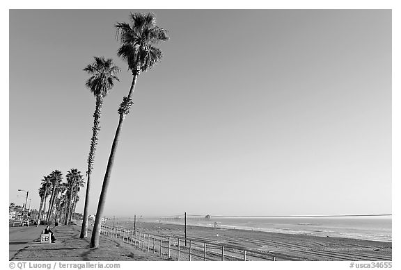 Black and white picture photo tall palm trees waterfront promenade and beach huntington beach orange county california usa