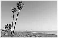 Tall palm trees, waterfront promenade, and beach. Huntington Beach, Orange County, California, USA (black and white)