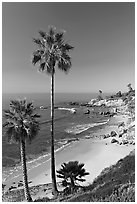 Palm trees and Rockpile Beach. Laguna Beach, Orange County, California, USA (black and white)