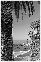 Beach and palm trees in Heisler Park. Laguna Beach, Orange County, California, USA ( black and white)