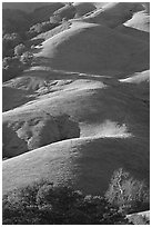 Emerald hills. California, USA ( black and white)