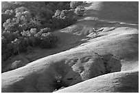 Hills and trees. California, USA (black and white)