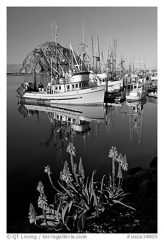 Flowers, fishing boats,and Morro Rock, morning. Morro Bay, USA (black and white)