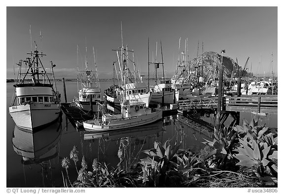 Flowers, harbor, and Morro Rock, morning. Morro Bay, USA (black and white)