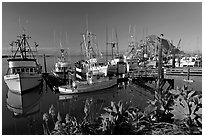 Flowers, harbor, and Morro Rock, morning. Morro Bay, USA ( black and white)